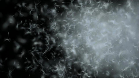 flying dandelion & catkins in smoke Animation