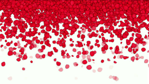 Falling Rose Petals,wedding Background,Valentine's Day stock footage