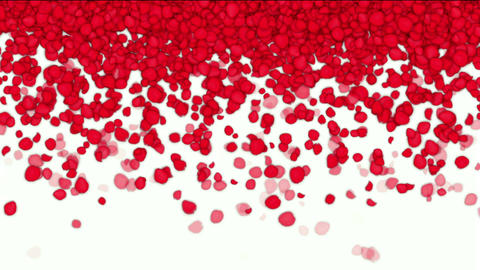 falling rose petals,wedding background,Valentine's Day Stock Video Footage