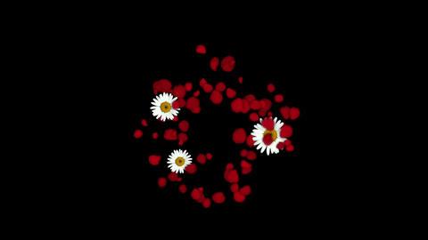 rose petals & daisy shaped wreath,wedding... Stock Video Footage
