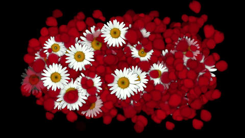 falling rose petals & daisy,wedding background,Valentine's Day Animation