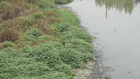 Shore plants & Pollution rivers Stock Video Footage