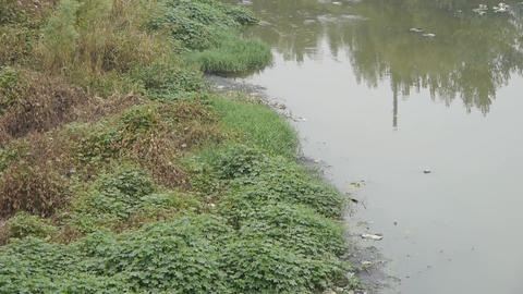Shore plants & Pollution rivers Footage