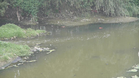 Pollution rivers & Shore plants Stock Video Footage