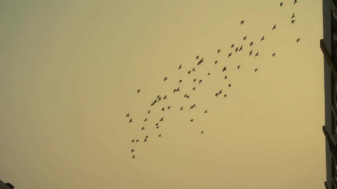 Flock of birds flying above the building Footage