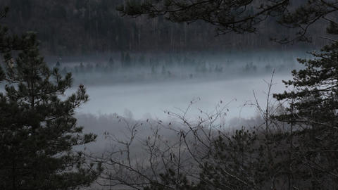 Timelapse - Mist above the pine forest Live Action