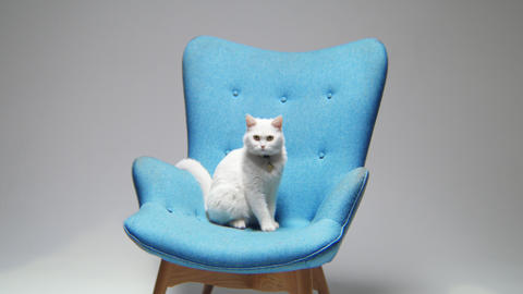 motion to armchair with sitting fluffy cat in light room Footage
