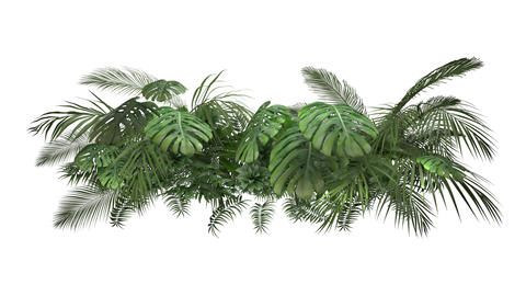 Tropical plant on an white background Animation