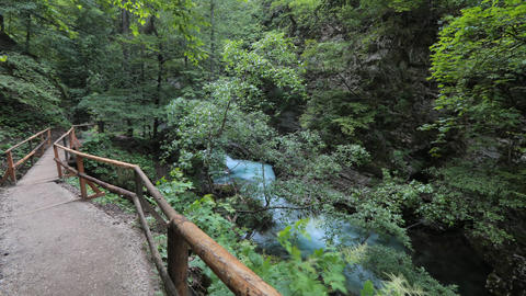 Timelapse - Lush greenery in a forest with river and a walkway for hikers Live Action