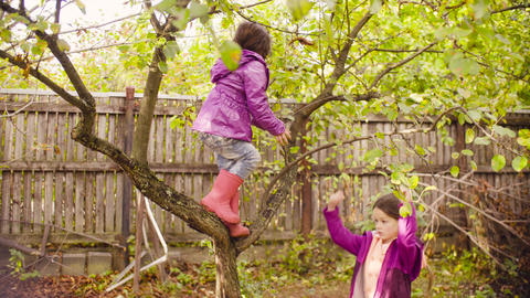 Little girl climbing up a tree and looking for apples Footage