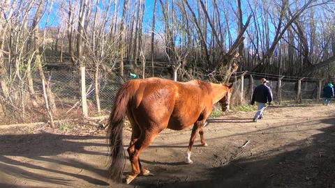 The horse in the forest Footage