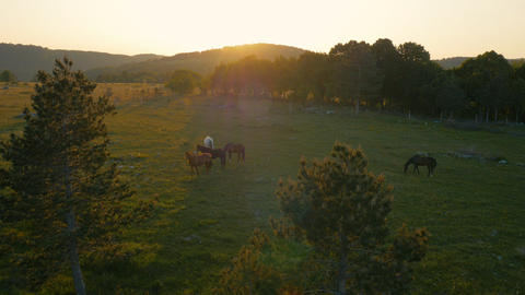 Aerial - Horses grazing on field at sunset Footage