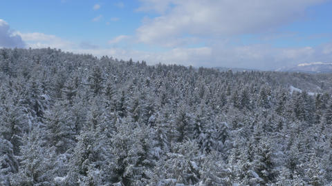 Aerial - Blue sky above the snowy forest. Flight past treetops Footage