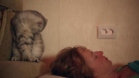 Cat wakes his sleeping mistress Footage