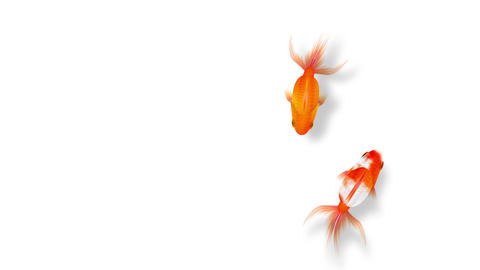 Goldfishes swimming, red white Animación