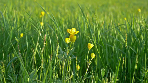 Green Grass And Flowers Background Live Action