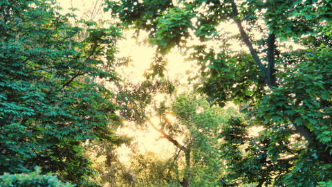 Beautiful sunny tree timelapse Archivo