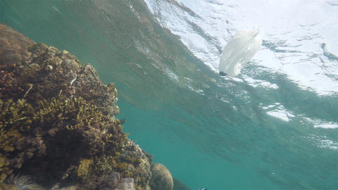Plastic bag next to the reefs in the ocean, underwater shot. Environmental Live Action