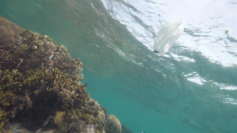 Plastic bag next to the reefs in the ocean, underwater shot. Environmental Footage