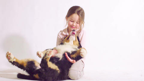 Girl and puppy of a bernese shepherd dog Live Action