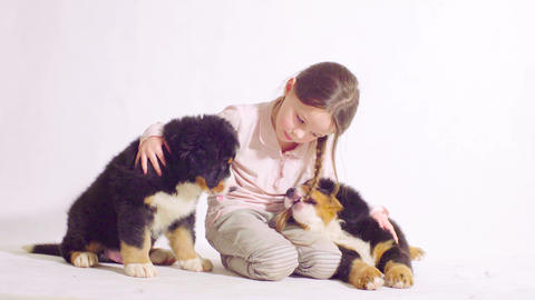 puppies of a bernese shepherd dog Live Action