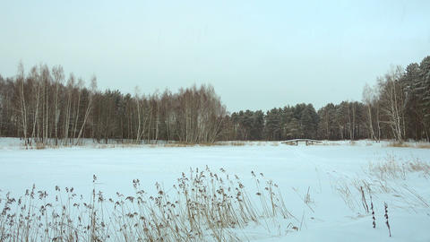 Beautiful winter landscape, forest lake and snow Live Action