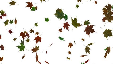 Falling leaves background animation Animation