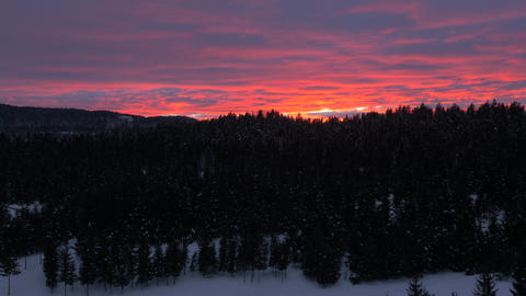 Aerial - Fiery sunset over winter forest. Flight past the tree Footage