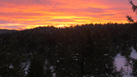 Aerial, raw footage - Stunning sunset over winter forest. Flight past the trees Footage