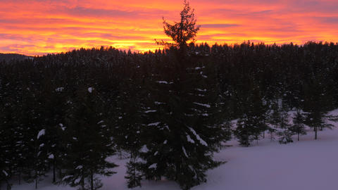 Aerial - Fiery sunset over winter forest with Christmas tree light up on a field Footage