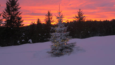 Aerial, raw footage - Christmas tree in forest at colorful sunset Footage