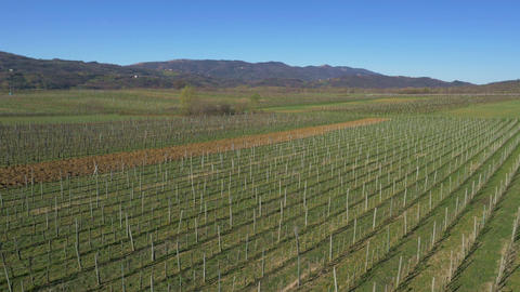 Aerial - Vineyard Landscape In Early Spring stock footage