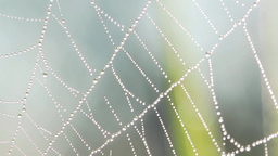 Spider Web with Dew Drops, Background, Close-up, Slow Motion Footage
