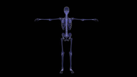 scan skeleton animation,loop,Alpha Channel Animation