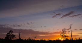 Timelapse of colorful sunset over marshland treeline Footage