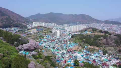 Aerial view Gamcheon Culture Village And beautiful cherry blossom in spring at Busan city South Live Action