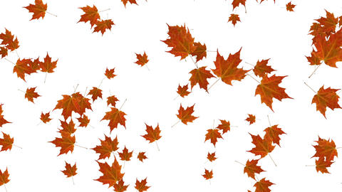 Falling leaves background animation Animation