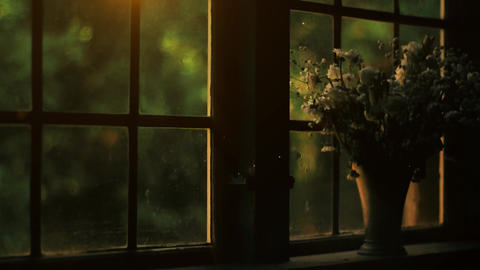 Withered flower, dead flower in front of old style window. Dark atmospheric interior, Depressed Live Action