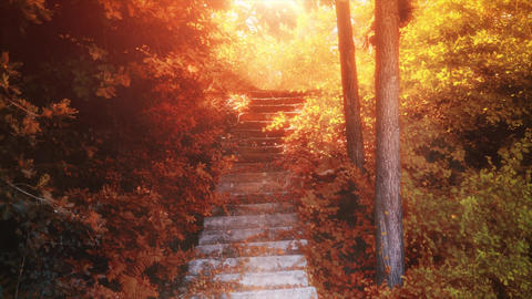 4K Autumn footage. Beauty and heavenly stairway to heaven, autumn and sunshine Live Action