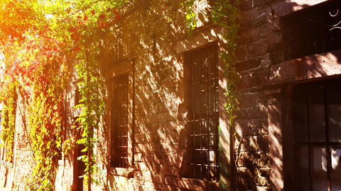 Aegean rock house facade with ivy plant, creeper house.... Stock Video Footage