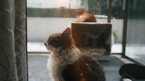 Adorable fat cat is lying on balcony. Kitten, feline cat, pet portrait in sunny day Footage