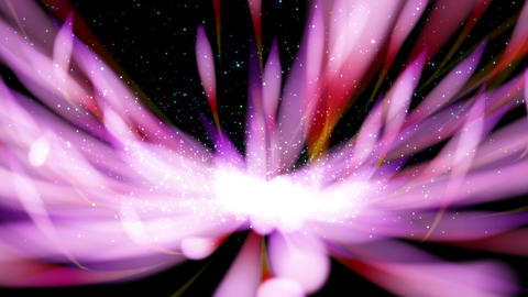 Particle of petal image ,horizontal viewpoint _2 Videos animados