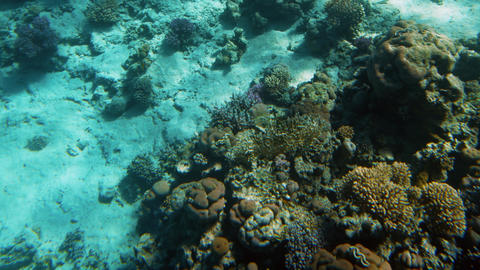 Amazing underwater 4k video of underwater life around coral reef. Beautiful Footage