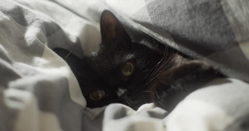 Black cat curled up in blanket on bed Footage
