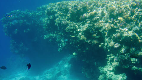 4k video of beautiful seascape of coral reef in REd sea. Ocean underwater life Footage