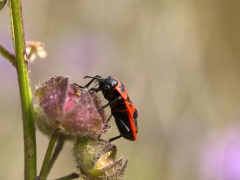 Ladybug and flower Photo