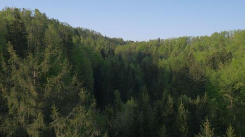 Aerial - Flight past the pine treetops Footage