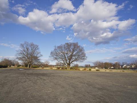 Park of winter Fotografía