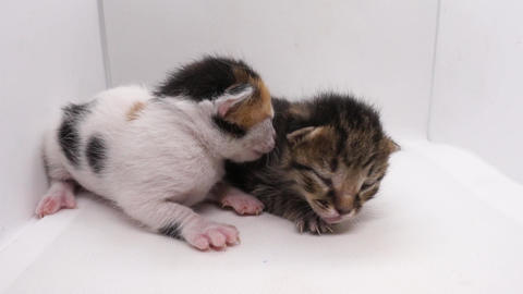 Kitten on white background. Isolated small, new born baby cat, kitty, feline. Unopened eye pet Footage