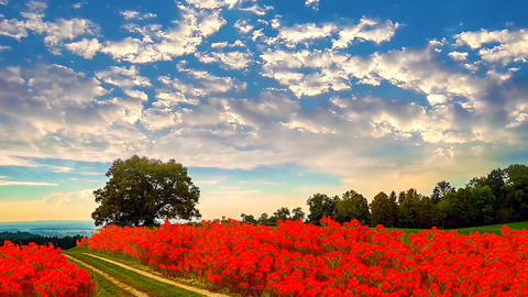 1 landscape of field with flowers beautiful moving sky Animation